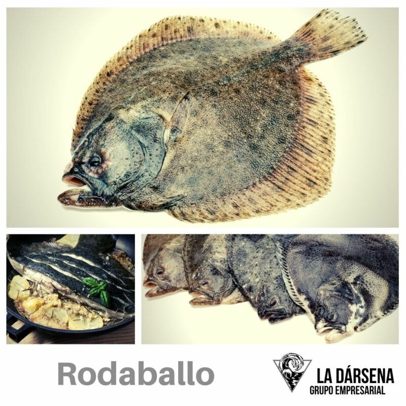 Rodaballo