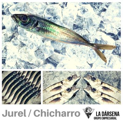 Jurel/chicharro